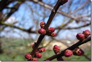 Nice Spring-22
