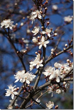 Nice Spring-3