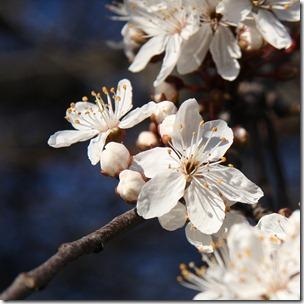 Nice Spring-13