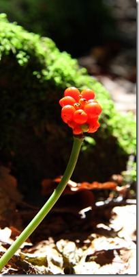 borse arancioni-8