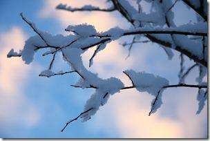 un cuore fra la neve-14