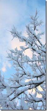 un cuore fra la neve