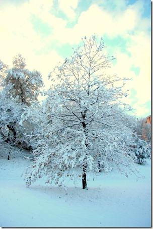 un cuore fra la neve-4