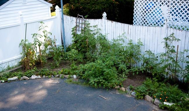 garden -8460