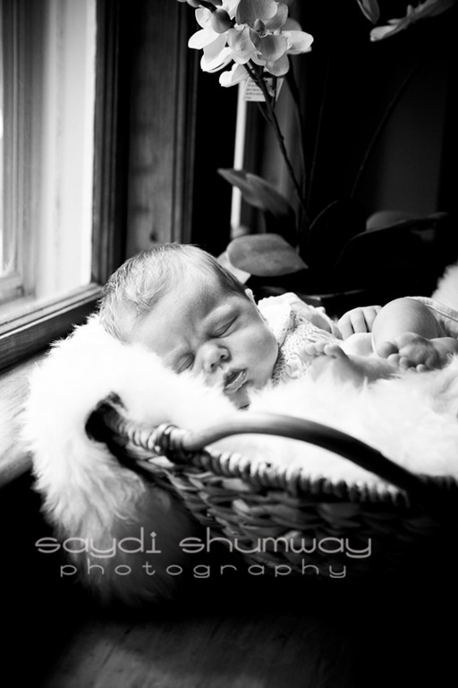 baby evelyn-9354