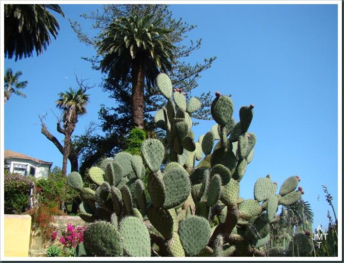 DSC03356-cactusBW