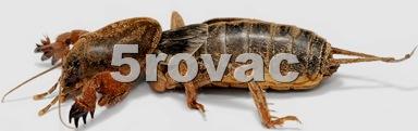 Rovac