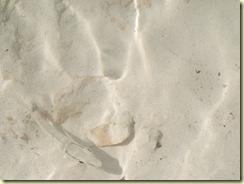 Riveara Maya 2010 014