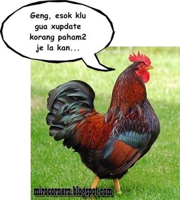 ayam_jantan