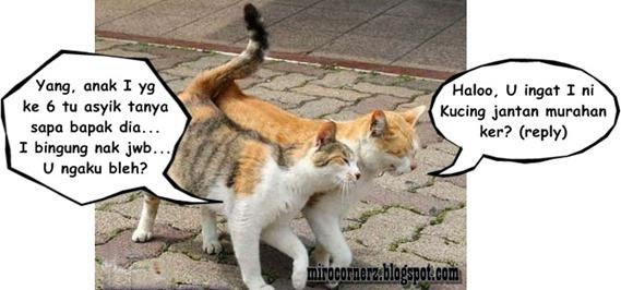 kucingromantis
