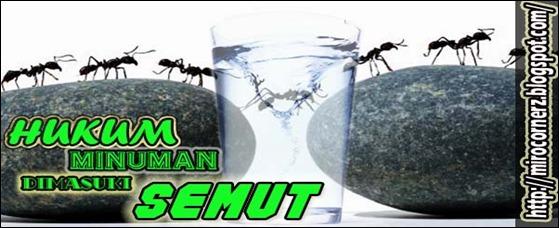 Hukum Minum Semut MC