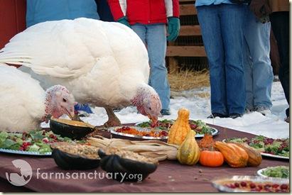turkey3