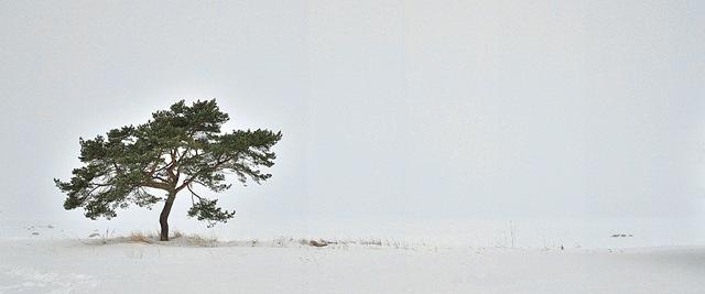 puuudumeres