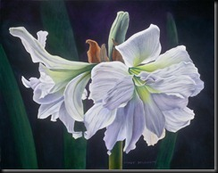 The Gift Amaryllis