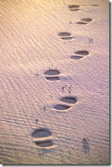 Footsteps-in-sand-