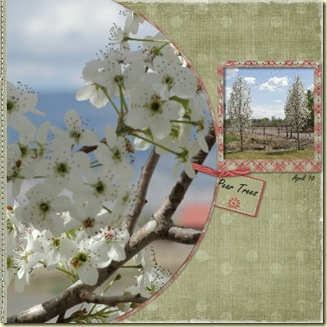sheriPear_Trees_1