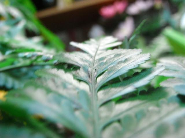 Marco of leaf