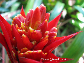 Exotic Bromeliads