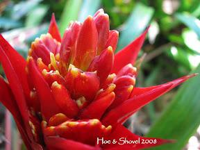 Exotic Bromeliads