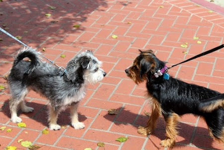 Meeting a friend.