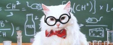 Кот учёный, Анализ блога
