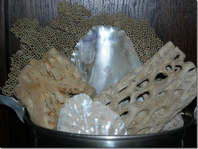 seashells 003
