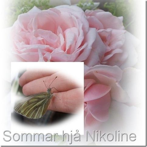 rose og sommarfugl