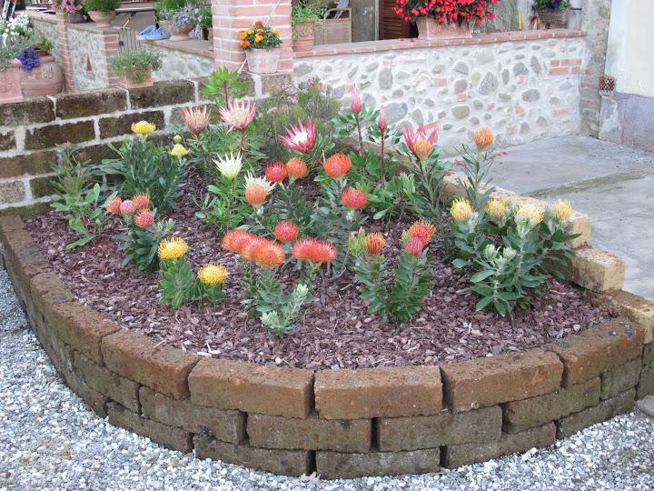 Le mie aiuole tropicali la protea forum giardinaggio for Mattoni per aiuole