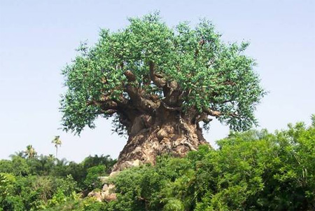 The Tree of Life at Disneys Animal Kingdom
