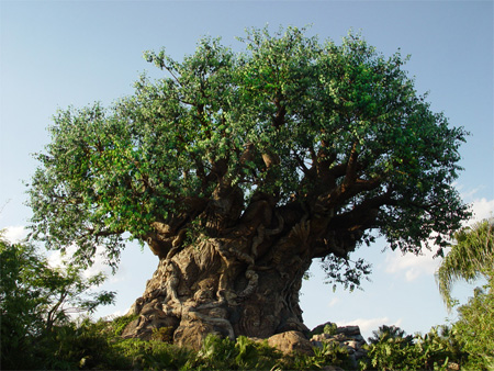 The Tree of Life at Disneys Animal Kingdom 20
