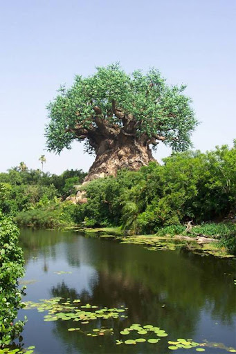The Tree of Life at Disneys Animal Kingdom 21
