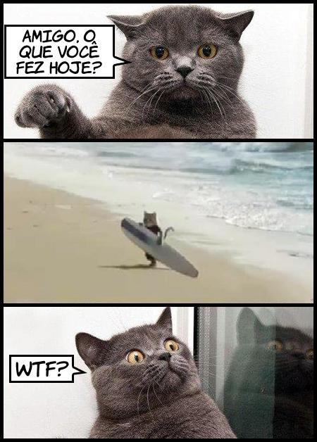 gatosurfista Gato surfista