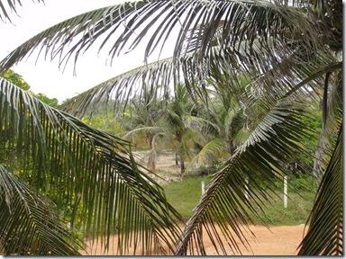 Coqueiro field