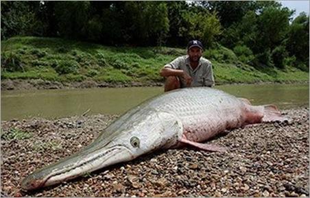 crocodile fish 10