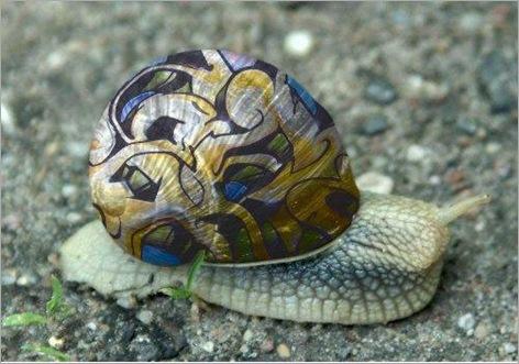 snail gaffiti 04