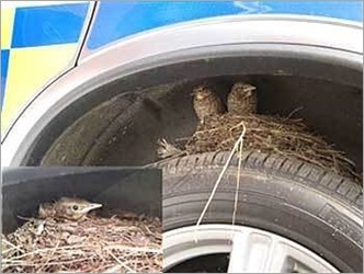 Birds Nests in the Most Bizarre Places 06