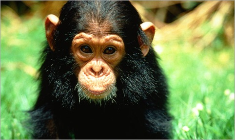 The Kardashian's Chimp