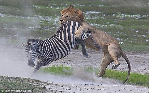 lion action 03
