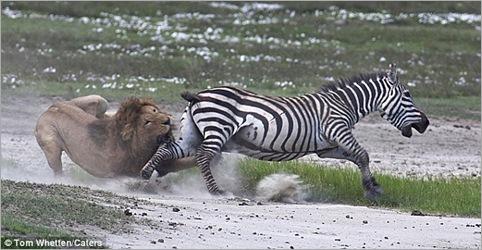 lion action 04