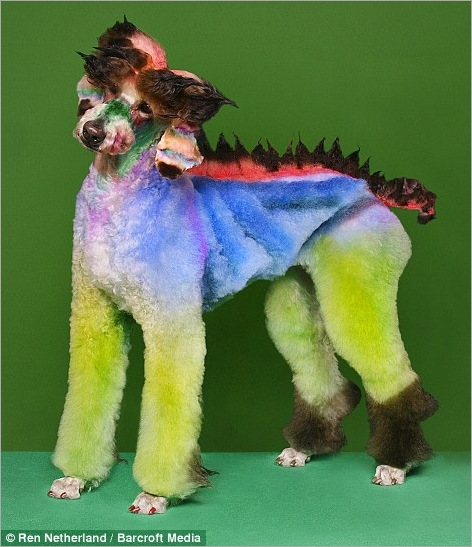 Here's a fishy tail! Dogs sculpted into works of art for extreme grooming contests 06