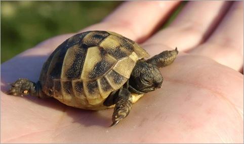 7 Tortoises