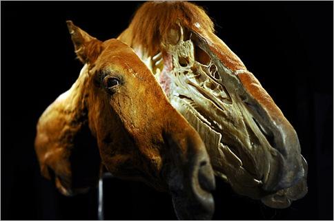 Horse plastic