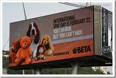 beta (3)
