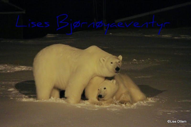 Lises Bjørnøyaeventyr