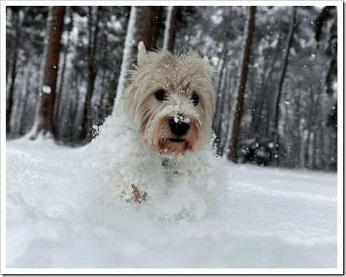 pb-101217-snow-dog-eg.photoblog900