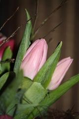 Tulipaner 009