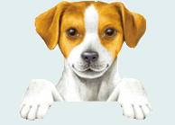 cagnolino che si affaccia 1