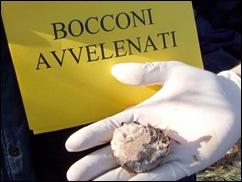 bocconi 2