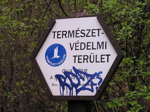 streetb art, Budapest,  vandalizmus, blog, tegelés, falfirka,   természetvédelmi terüle