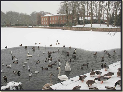 The duck pond at Dunham Massey, in winter